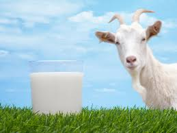 goat milk best for healthy growth u2013 report my mobile doctor