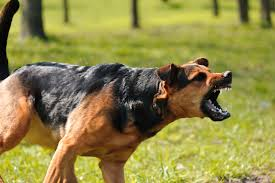 state with most dog owners 2016 santa rosa animal bites lawyer santa rosa animal attacks lawyer