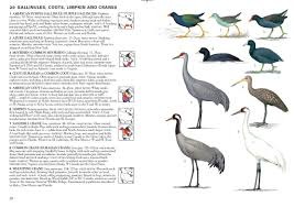 review birds of north america and greenland thermal birding