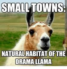 Llama Meme - 25 best memes about drama llama drama llama memes