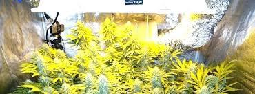 250 watt hid grow lights hps plant lights grow basics for the first timer grow lights for