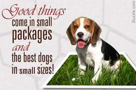 Types Of Dogs About Different Breeds Of Dogs Dog Breeder