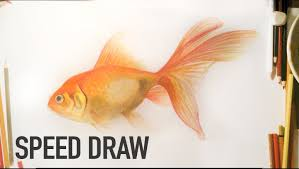 how to draw a realistic goldfish with watercolors and color