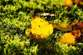 free images grass plant ground moss autumn soil yellow