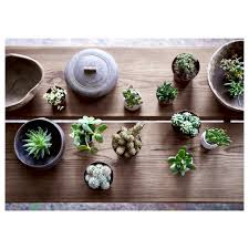 succulent potted plant assorted 9 cm ikea