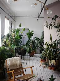 In House Plant The Accidental Jungle Shabd Simon Alexander U0027s Houseplants In A