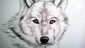 cool animal drawings free download cool pencil drawings easy