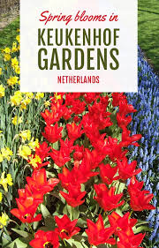 spring blooms in keukenhof gardens in pictures u2013 on the luce