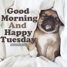 Happy Tuesday Meme - image result for good morning happy tuesday week pinterest