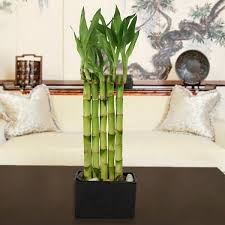 decorative indoor plants the best indoor plants hum ideas