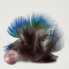 peacock ribbon multi peacock sparkle sheer ribbon