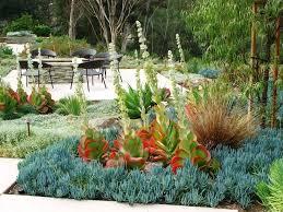 49 best s s s succulents images on pinterest succulents garden