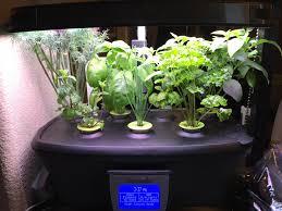 Aerogarden by Aerogarden Herbs 6 Weeks Imgur