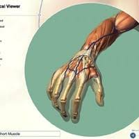 Interactive 3d Anatomy 25 Best 3d Models And Simulation Images On Pinterest Human Body