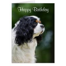 cavalier king cards invitations greeting photo cards zazzle