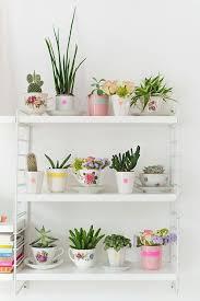 30 ideas para decorar con cactus y terrarios cacti plants and