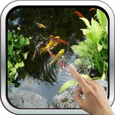 koi free live wallpaper apk magic touch realistic koi live wallpaper android apps on