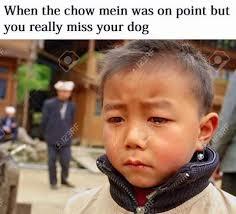 Asian Dog Meme - being half asian imgur