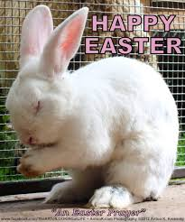 Cute Easter Meme - the happy easter prayer rabbit found praying funny photo meme