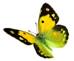 what does a yellow butterfly symbolize you probably don t