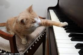 Blind Boy Plays Piano Stevie Wonder The Blind Piano Playing Cat Love Meow