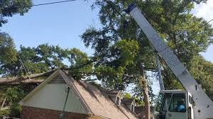wilmington tree service tree removal trimming in wilmington nc