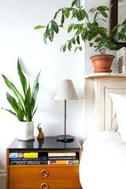 best plants for bedroom snake plant for bedroom snake plant in bedroom 5 snake plant snake