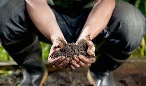 Garden Soil Types - down to earth create a beautiful garden whatever your soil type