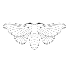 butterfly bombyx mori sketch of butterfly stock vector image