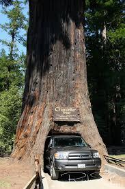 Chandelier Tree Address Exciting Chandelier Drive Thru Tree Images Chandelier Designs