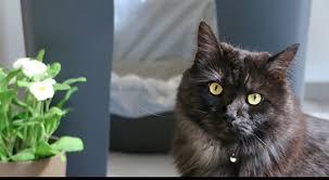 diy cat litter box holder easy way to hide kitty litter
