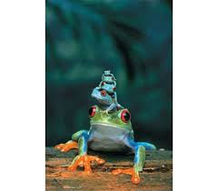 eyed tree frog and babies poster 4 baby tree frogs