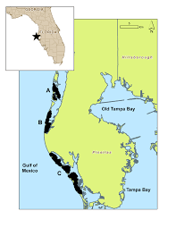 Map Of Tampa Florida Map Of Study Area Pinellas County Barrier Islands Figure 1 Of 5