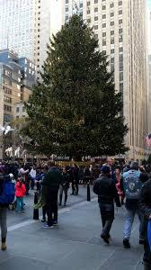 rockefeller center christmas tree to come from pennsylvania