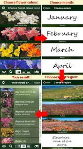 Identify Flowers - app wildflowers south africa nature apps sunbird