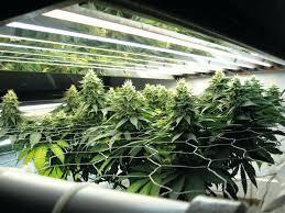 best grow lights on the market grow ls radditude co