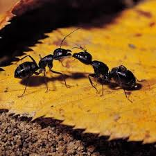 best 25 ants in garden ideas on pinterest small front yard