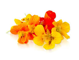 edible flowers for sale edible flowers delivered direct to you from buyfruit au