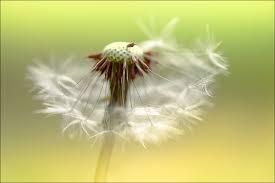 make a wish where lies a collection of desire fgo destiny