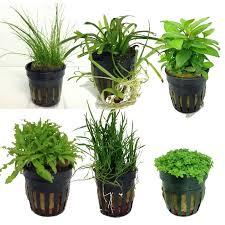 Tropical Aquatic Plants - uae aquatic plant for sale in uae sharjah