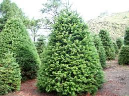 phenomenal evergreen tree farm image ideas
