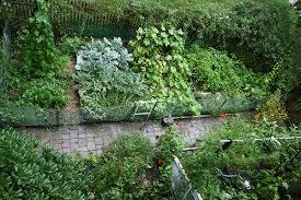 attractive skippys vegetable garden arizona in vegetable garden