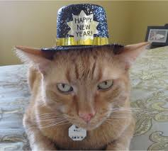 Happy New Year Cat Meme - what s that wally doing the island cats every cat wants to be an
