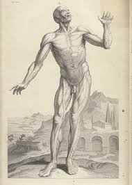 Anatomy The Human Body Historical Anatomies On The Web William Cowper Home