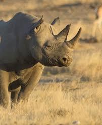 sle resume journalist position in kzn wildlife cing rant rhino poaching rocks ezemvelo eastern cape cops bust four