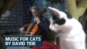 Cat Photo Album American Cellist Cuts Album For Cats Youtube