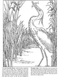 584 coloring pages print birds images