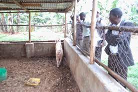 febuary 2015 pig farmer training 27th 28th pig production and