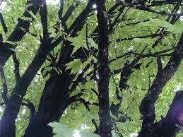 the black mold on the trees and buildings are an indication of a