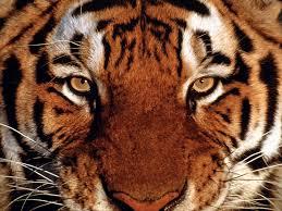 sgem 18 eye of the tiger traumatic hyphema the skeptics guide